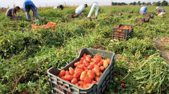 schiavitu-in-agricoltura-1024x576